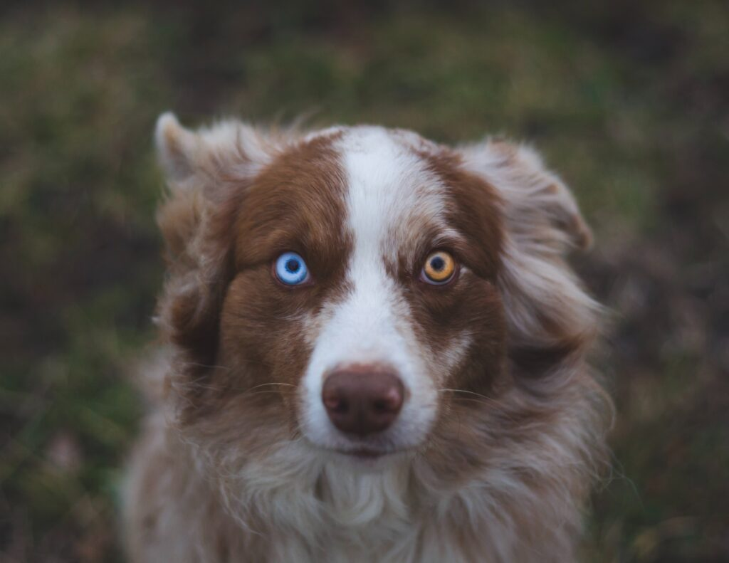 white and brown dog